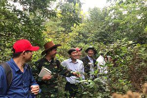 Khảo sát dự án trồng và bảo tồn sâm Bố Chính dưới tán rừng Phong Nha Kẻ Bàng