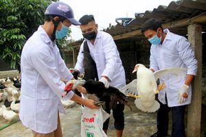 Nghệ An khống chế thành công ổ dịch cúm gia cầm A/H5N6 đầu tiên