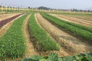 Bỏ túi những ý tưởng làm giàu từ nông nghiệp lợi nhuận cao