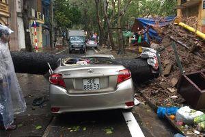 Hà Nội: Mưa to gió lớn quật đổ cây đè bẹp ô tô