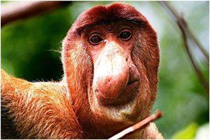 Top 10 loài động vật xấu xí nhất thế giới