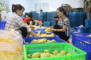 Kết nối doanh nghiệp - nông dân trong tiêu thụ nông sản