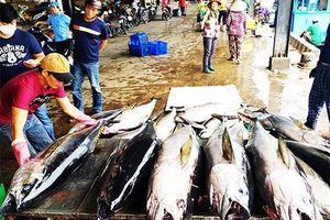 Nghiệm thu đề tài công nghệ khai thác cá ngừ đại dương