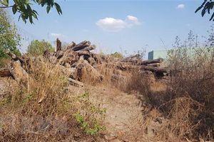 Vụ 8.000m3 gỗ để mục nát ở Bình Phước: Kiểm điểm những người liên quan