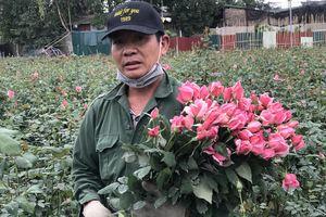 Làng hoa lớn nhất Hà Nội ủ rũ vì Covid-19: 'Chắc phải bán đất để bù lỗ'