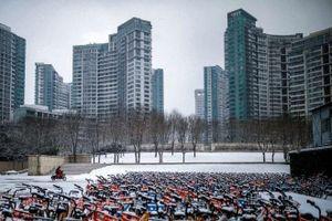 Covid-19 giúp dịch vụ chia sẻ xe đạp hồi sinh tại Trung Quốc