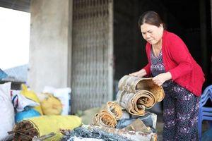 Nhộn nhịp mùa quế ở vùng cao Quảng Ngãi