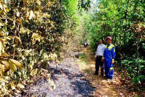 Cần xử lý nghiêm những đối tượng cố tình đốt rừng