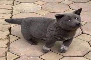 Chú chó tên Dúi nổi tiếng MXH quốc tế, được fan TQ vẽ thành tranh