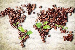 Giá cà phê hôm nay 6/3: Giảm mạnh kỷ lục 700 đồng/kg