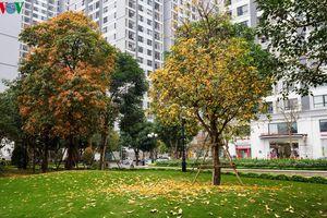Ngắm Hà Nội đẹp lãng mạn vào mùa cây thay lá
