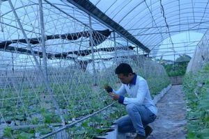 Khởi nghiệp từ nông nghiệp tại quê nhà, ấp ủ ước mơ làm giàu