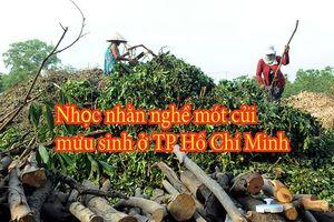 Nhọc nhằn nghề mưu sinh mót củi ở TP Hồ Chí Minh