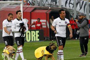 Đội bóng Chile dắt chó ra sân làm linh vật