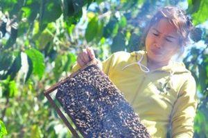 Mùa đưa ong hái mật