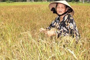Ruộng khô, người khát vì thiếu trạm bơm