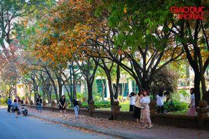 Con đường lá vàng đẹp như trong phim Hàn Quốc tại ĐH Sư phạm Hà Nội