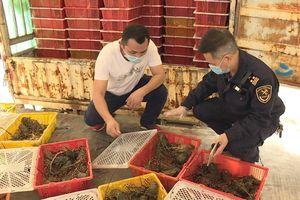 Thực hiện tốt phòng dịch Covid-19: Giao dịch hàng hóa qua cửa khẩu Đông Hưng-Móng Cái tăng trưởng