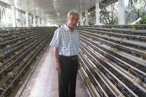 Tiền Giang: Hợp tác liên kết sản xuất trứng cút xuất khẩu