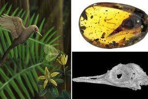 Phát hiện loài khủng long có kích thước bé hơn loài chim ruồi nhỏ nhất thế giới