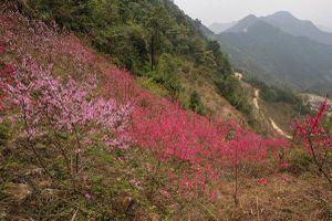 Mẫu Sơn rực rỡ mùa hoa