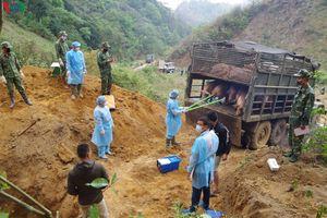 Biên phòng Sơn La tiêu hủy gần 7 tấn lợn buôn trái phép qua biên giới