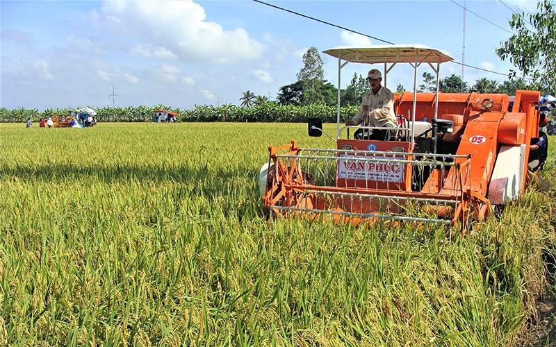 Giải pháp mở rộng diện tích trồng lúa đặc sản ở Sóc Trăng