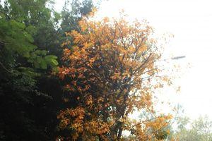 Hồ Gươm đẹp đến nao lòng trong mùa cây thay lá