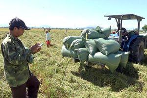 Vạn Ninh: Vụ lúa bội thu