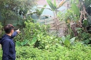 Quảng Nam: Xí nghiệp chế biến gỗ gây ô nhiễm