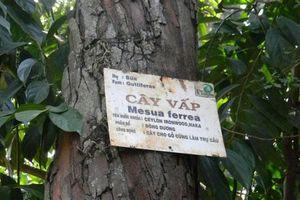 Vì sao trên các biển tên cây trong công viên lại thường ghi chú bằng tiếng Latinh?