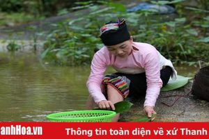 Về Năng Cát xem người Thái siêu rượu men lá dưới chân đỉnh Pù Rinh