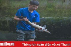 Nuôi cá từ nước thác mát trong, 'vua' cá hồi kiếm hàng trăm triệu đồng mỗi năm