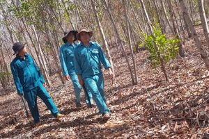 Bình Thuận: Cảnh báo cháy rừng cấp cực kỳ nguy hiểm