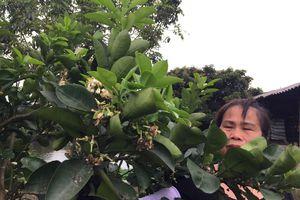 Bắc Giang: Vườn cây ăn trái rụng quả do thời tiết thất thường