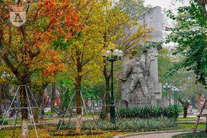 Phố Hà Nội đẹp ngỡ ngàng mùa cây trút lá