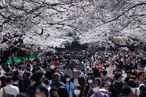 Không ngại Covid-19, cả chục nghìn người đi ngắm hoa anh đào, đuốc Olympic