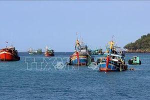 Phát triển bền vững nghề cá - Bài 1: Giá trị kinh tế cao