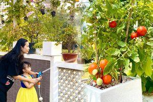 Mát mắt với khu vườn toàn cây ăn quả trong biệt thự rộng 200 m2 của NSƯT Trịnh Kim Chi và chồng đại gia