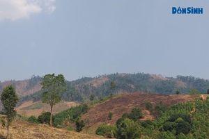 Kon Tum: Chủ tịch UBND huyện trả lời về việc 'Hàng ngàn ha rừng bị lấn chiếm, cạo trọc'