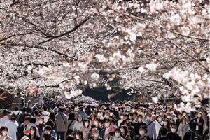 Chuyên gia: Người Nhật đang phớt lờ đại dịch COVID-19