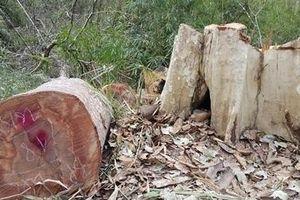 Khởi tố 3 vụ phá rừng quy mô lớn ở địa bàn biên giới