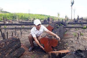 Gia Lai khởi tố 3 vụ án hình sự về tội hủy hoại rừng