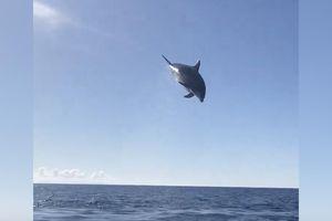 Cá heo hưng phấn tung người phóng lên khỏi mặt nước 6 mét