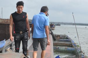 Tàu vỏ sắt lớn đâm vào lồng bè nuôi cá, gây thiệt hại ước tính trên 500 triệu đồng