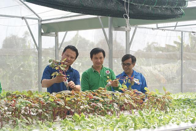 Khởi nghiệp với mô hình trồng rau thủy canh Trái Tim Việt