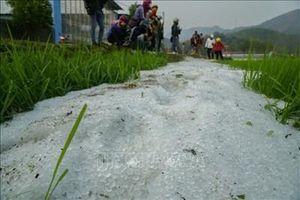 Dông lốc, mưa đá gây thiệt hại về nhà ở, cây trồng tại Điện Biên