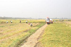 Cân nhắc thận trọng việc xuất khẩu gạo