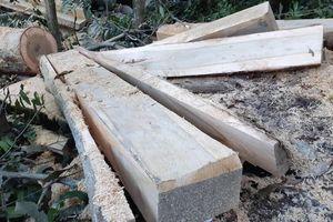 Khởi tố vụ phá rừng phòng hộ đầu nguồn Gia Lai