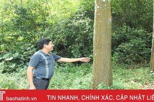 Vũ Quang phát triển rừng trồng phục vụ nhà máy sản xuất gỗ lớn nhất Hà Tĩnh